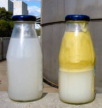 Dairy waste water samples high fat